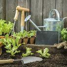 Gemüse vorziehen: So klappt's mit Ihren Tomaten, Zucchinis & Co.