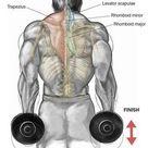 The 5 Most Effective Shoulder Dumbbell Exercises for V-taper Physique - GymGuider.com