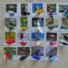 Montessori Human Anatomy Human Organs 5 Parts Cards with   Etsy