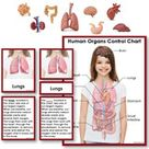 Human Organs 3 Part Cards with Definitions, Objects and Matching Charts