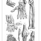A1 Poster. Articulations anatomy engraving 1866
