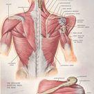 Shoulder Health – Part 2
