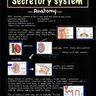 Secretory System