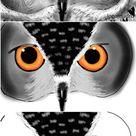 PicsArt Users Share Owl Drawing Tutorials - Picsart Blog