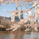 6 Charming Things to do in NYC In Spring   Dana Berez