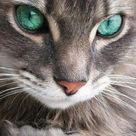 Katzenaugen sind einfach magisch <3