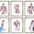 Set 6 Watercolor Anatomy Art Doctor Gift Medical Decor Human Muscles Structure Diagram Poster Surgical Anatomy Drawing Clinic Wall Art