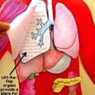 Human Body Systems Project & Lift-the-Flap Model w/ Human Body Reading Passages