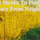 Shrubs For Privacy