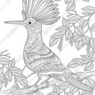 Coloring pages for adults. Hoopoe Bird. Adult coloring pages. | Etsy