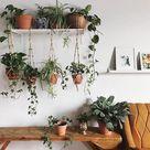 The Best 9 Indoor Hanging Plants Even A Beginner Won't Kill | Posh Pennies
