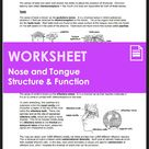 Tongue & Nose Anatomy - Structure & Function of Taste & Smell (HS-LS1-A)