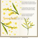Vector Flyer Template Concept Mimosa Flowers Stock Vector (Royalty Free) 1085822216