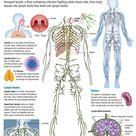 Human Body: Lymphatic System