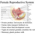 Chapter 27 Reproductive System    ppt download