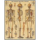 Skeletal System Puzzle | Paper Source