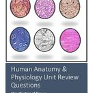 Human Anatomy & Physiology Review Worksheet: Body Tissues (Virtual Friendly)