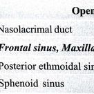 Nasal wall and openings into them ... [ Note: Superior - Ethmoidal sinus ... Sphenoethmoidal recess - Sphenoid sinus, (*) Ethmoid only one in combination ]