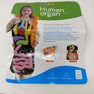 Anatomy educ. kids Human Organ cognition apron