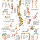 Farbe : Gemischt. Stretching 2 vonRüdiger Anatomie. Seit über 15 Jahren. für dich da! Wir sind gerne.