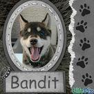 Dog Scrapbook