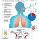 Infographic - Lungs: How Gas Exchange Works