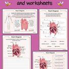Heart Diagram worksheets FREE