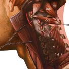 Clinical Anatomy/Anatomical Publications