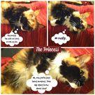 Cat Diary