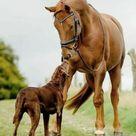 Serrapet For Pets – Dogs, Horses & Other Pets