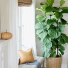 How I Saved My Fiddle Leaf Ficus Tree By Doing 6 Simple Things - City Farmhouse