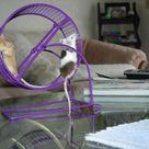 Pet Mice