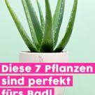 Diese 7 Pflanzen sind perfekt fürs Bad!   DEKO