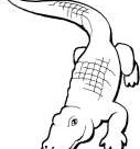 Printable Alligator Coloring Page