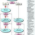 PALS algorithm: cardiac arrest/ pulseless arrest by drldf