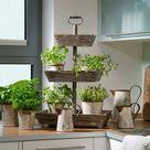 Kräuter in der Küche ziehen  Kübelpflanzen