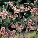 3 Unusual plants for New Vintage gardens, Caroline Garland