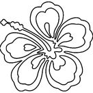 Coloring Pages Hawaii Hawaiian Flower Popular Sketch Coloring Page