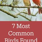 7 Most Common Birds Found on Feeders