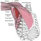 The Clandestine Source of Shoulder Pain and Dysfunction