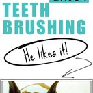 Dog Hates Teeth Brushing? How To Get Your Dog To Enjoy A DIY Dog Grooming Session