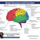 Neurofeedback Therapy in Connecticut | NY Neurofeedback Therapist | Dr. Roseann Capanna-Hodge