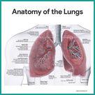 Respiratory System Anatomy and Physiology - Nurseslabs
