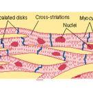 BIOL 2061 Cell and Developmental Biology – Biochemistry World