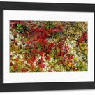 Framed Photo. Lingonberries, Cowberries & Lichen, Lofoten