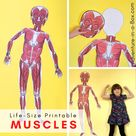Free Printable Life Size Organs for Studying Human Body Anatomy with Children