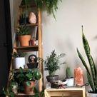 Rearranged all my plants!