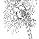 Hawaiian Coloring Pages - Parrot