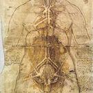A1 Poster. Leonardo Da Vinci: Anatomy