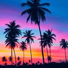 Exciting World Of Sunset Photography - Bored Art